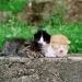 http://www.pascale-roger.com/sites/default/files/Chat%2012_2.jpg