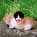 http://www.pascale-roger.com/sites/default/files/Chat%2013_1.jpg