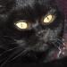 http://www.pascale-roger.com/sites/default/files/Chat%2020_1.jpg