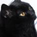 http://www.pascale-roger.com/sites/default/files/Chat%2023_1.jpg
